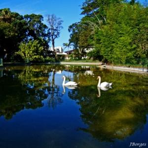 /Lago dos Cisnes II