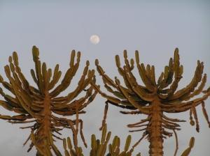 /a olhar a lua