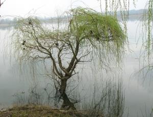 Outros/a árvore