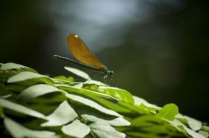 Macro/libelinha1