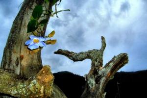 Paisagem Natural/A flor e a árvore seca
