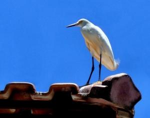 Animais/Pássaro no telhado