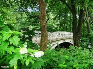 Paisagem Urbana/Central Park