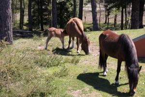 Outros/Família de... Cavalos