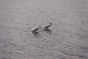 Outros/Aves migratórias