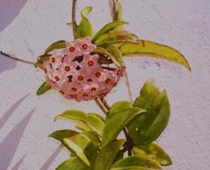 Outros/a flor da cera