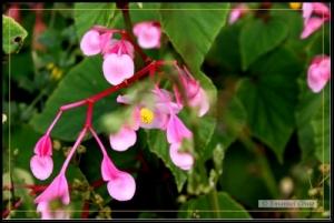 Paisagem Natural/Mais flores do meu jardim