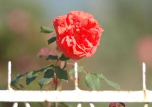 Paisagem Natural/dona flor e seus tres espinhos