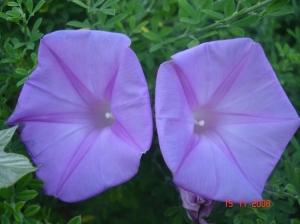 Outros/Flor selvagem