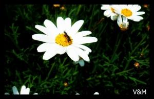 Paisagem Natural/:D