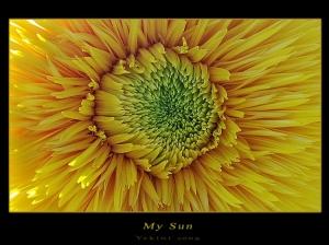 Macro/My Sun