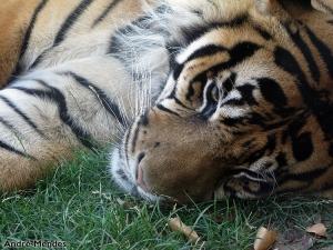 Animais/Já dormia uma sesta...