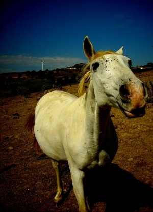 Animais/Horse