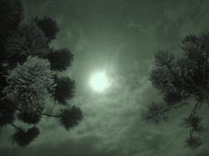 Outros/Lua entre dois pinheiros