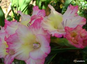 Outros/No jardim da Carmita