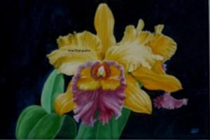 Outros/A Orquidea (Tela pintada por meu marido)