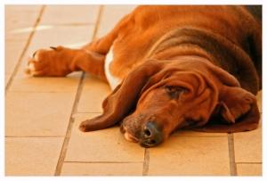 /Soneca, um cão muito especial