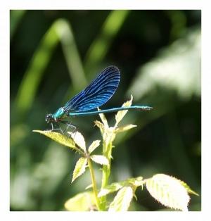 Outros/Anjo Azul
