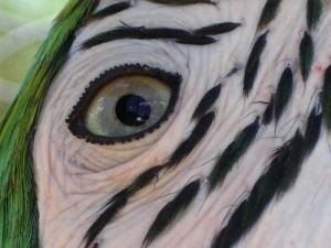 """/""""Olhar verde... de Esperança"""""""