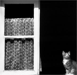 /Gato de Janela