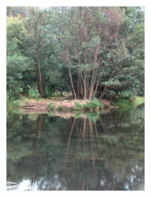 Outros/Espelho da Natureza