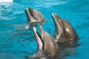 /Golfinhos