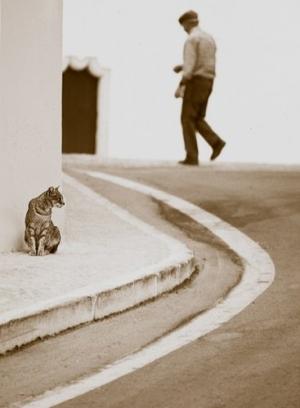 /Gato da esquina