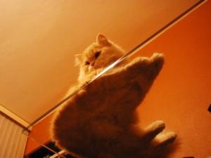 /Gatos gostam de ver as coisas de cima...