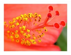 /Vermelho e Amarelo