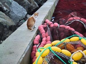 /O Pescador Felino