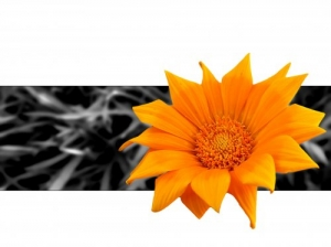 /Uma flor...
