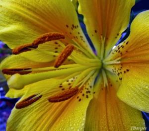 /Yellow beauty...