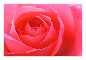 /Como uma flor vermelha