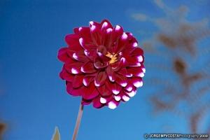 Macro/Flower n'blue sky