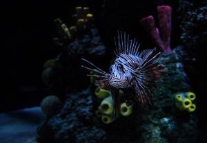 /Aquarium