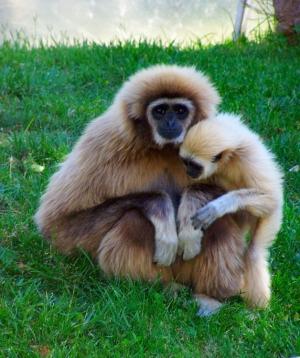 Animais/Laços de amor