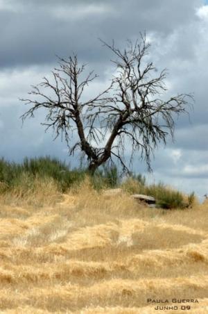 Outros/Minha Árvore