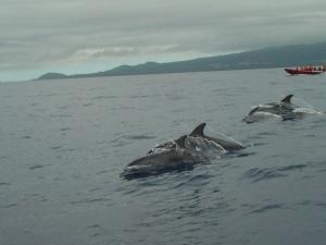 Outros/Blue Dolphin Sea Race