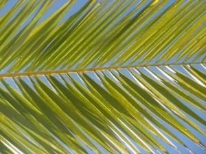 /...no olhar da minha palmeira...