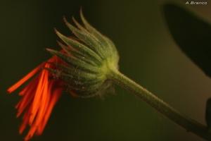 Macro/apenas uma flor...