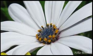 Macro/Coroa de flores para uma flor
