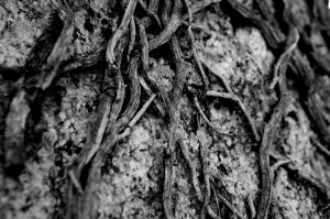 Outros/raízes