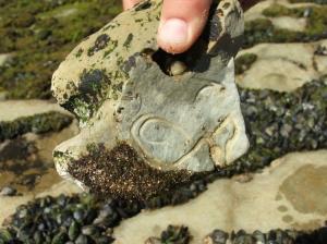 Macro/As formas nas/das rochas