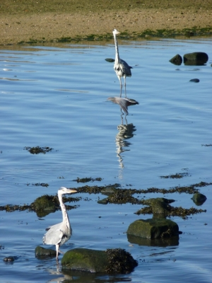 Animais/a couple of herons in Douro river