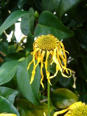 Outros/A Flor