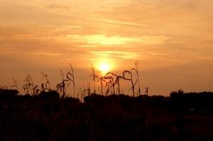 Outros/Sol de Outono - 2009