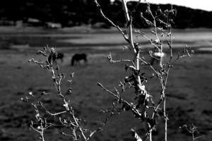 Paisagem Natural/Um peito queimado e três cavalos dançantes.