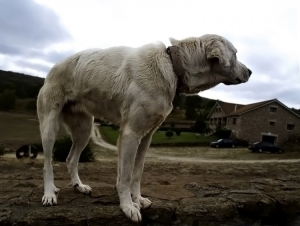 /Desafio-Vida Animal
