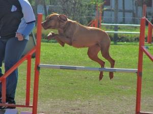 Desporto e Ação/AGILITY - deporte con perros