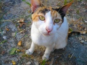 Gentes e Locais/Gato de rua